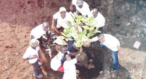 space and style tree planting shingles in kenya